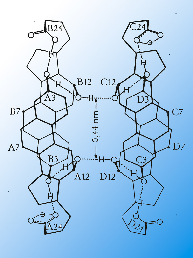 Deoxycholic acid in immune response